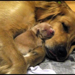 Mommy and puppy