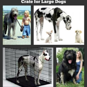 Large Dog Crates