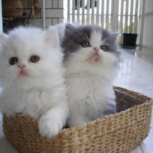 Basket of cute kitties