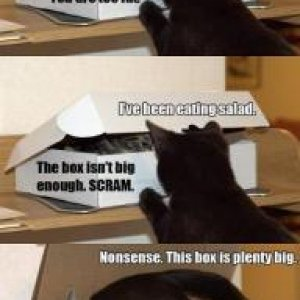 Box loving cats